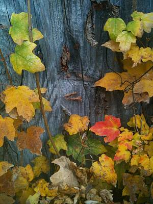 Leaves And Shed Art Print by Charles Morford