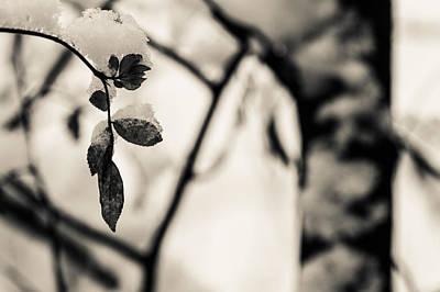 Photograph - Leaves And Snow by Andreas Levi
