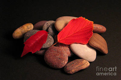 Photograph - Leaves And Stones by Art Photography