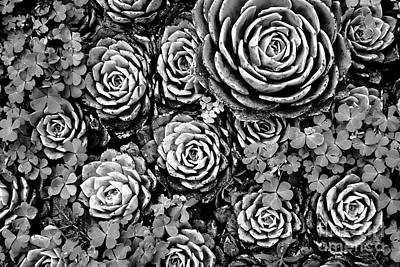 Leaves And Succulents Print by James Brunker