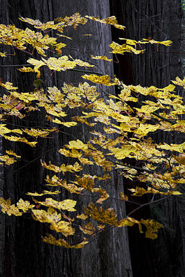 Photograph - Leaves And Trees by Robert Woodward