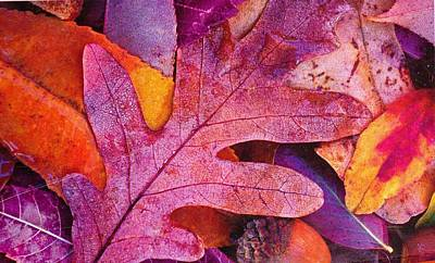 Leaves Art Print by Anne-Elizabeth Whiteway