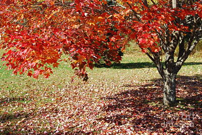 Photograph - Leaves Are Falling by Eunice Miller