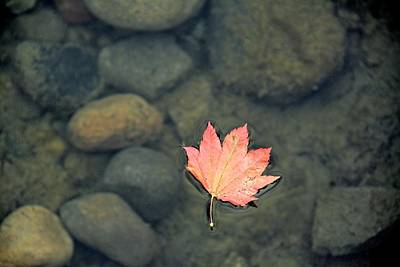 Fallen Leaf On Water Photograph - Leaves Are Falling by Rachel Cash