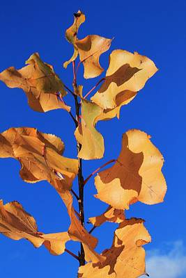 Photograph - Yellow Leaves Blowing In The Wind by Michael Saunders