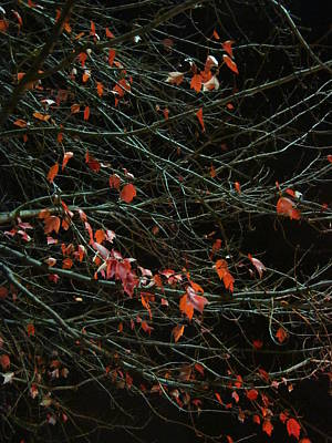 Photograph - Leaves By Night by Guy Ricketts