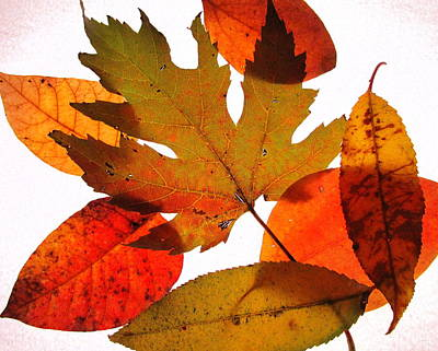 Photograph - Leaves by Catherine Howley