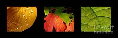 Photograph - Leaves Celebration 2 by France Laliberte