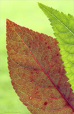 Photograph - Leaves by Daniel Behm