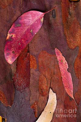 Photograph - Leaves by David Benson