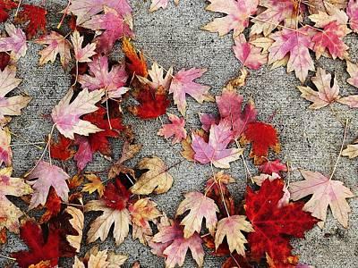 Photograph - Leaves by David Pantuso