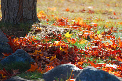 Photograph - Leaves Falling by Lorena Mahoney