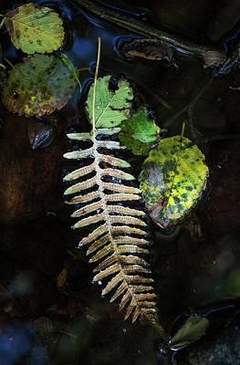 Leaves Float In A Stream  Elsie Art Print by Robert L. Potts