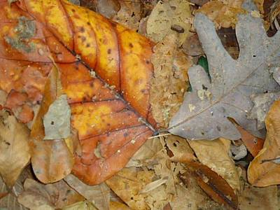 Photograph - Leaves by Glenn Calloway