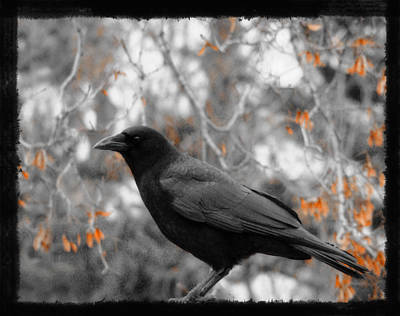 Crow Image Photograph - Crow In Fall by Gothicrow Images