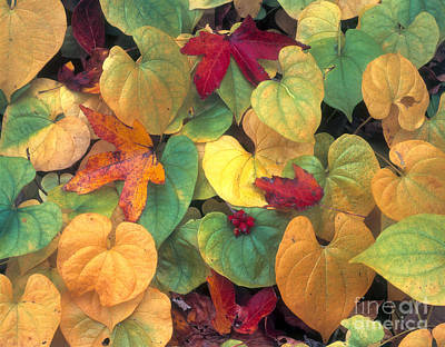 Photograph - Leaves Great Smoky Mountains by Jim Steinberg
