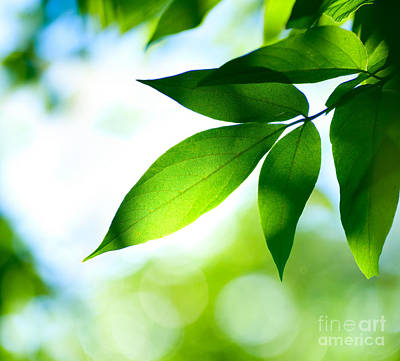 Art Print featuring the photograph Leaves Green by Boon Mee