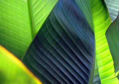 Art Print featuring the photograph Leaves - Green by Haleh Mahbod