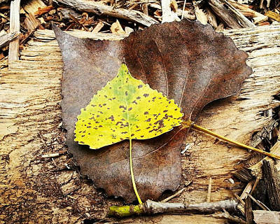 Nature Photograph - Leaves by Inspired Arts