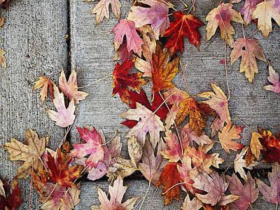 Photograph - Leaves II by David Pantuso