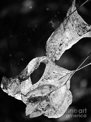 Photograph - Leaves In Black And White by Jane Ford