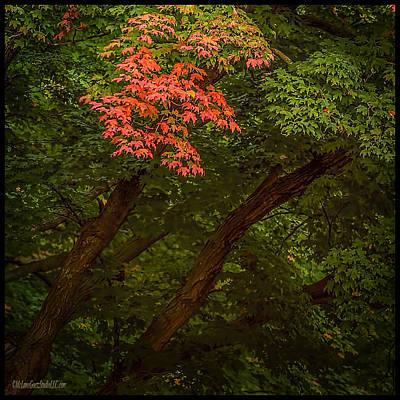 Harvest Photograph - Leaves In Fall by LeeAnn McLaneGoetz McLaneGoetzStudioLLCcom