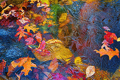 Photograph - Leaves In Ice Abstract by John Haldane