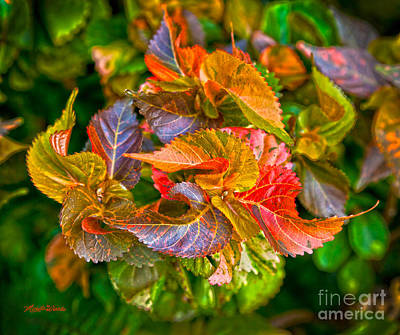 Photograph - Leaves In Motion by Michelle Constantine