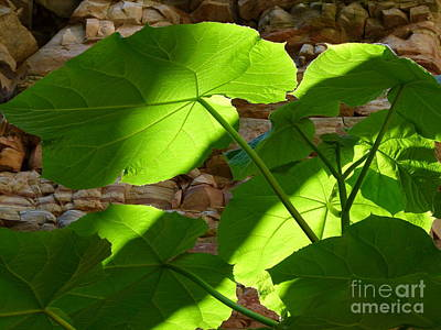 Photograph - Leaves In Shadow by Jane Ford