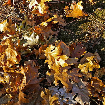 Photograph - Leaves In Slanting Sun by Michele Myers