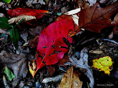 Photograph - Leaves In The Fall by Kimmary MacLean