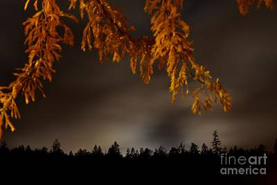 Leaves In The Night II Art Print by Phil Dionne
