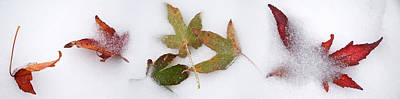 Fallen Leaf Photograph - Leaves In The Snow by Panoramic Images