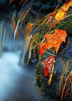 Photograph - Leaves In The Stream by Carolyn Derstine