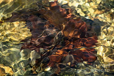 Photograph - Leaves In The Stream by Fred Sheridan