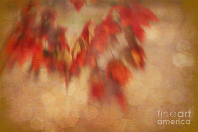 Photograph - Leaves In The Wind by Judi Bagwell