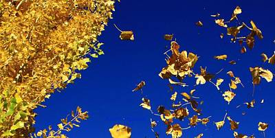 Photograph - Leaves by Kristy Jeppson