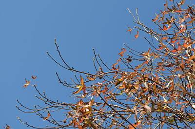 Leaves Left Art Print
