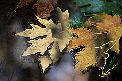 Digital Art - Leaves by Linda Carruth
