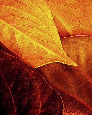 Arteries Photograph - Leaves by Luiz Laercio