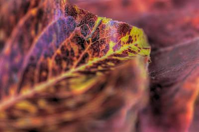 Photograph - Leaves by Marta Cavazos-Hernandez