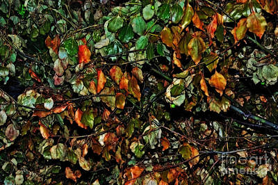 Photograph - Leaves Of All Seasons by Kaye Menner