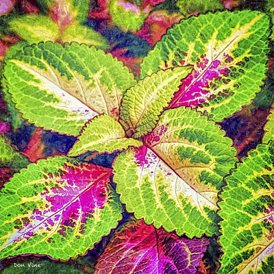 Photograph - Leaves Of Coleus by Don Vine