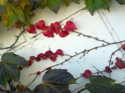 Photograph - Leaves Of Love by Barbara J Blaisdell