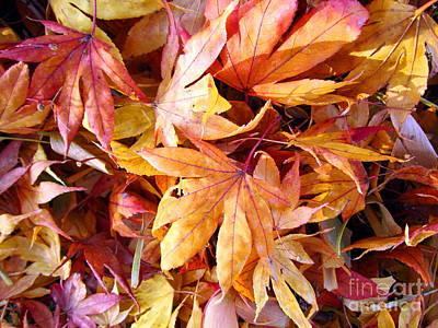 Photograph - Leaves Of Many Colors by Cynthia  Clark