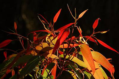 Photograph - Leaves Of Red And Gold by Georgiana Romanovna