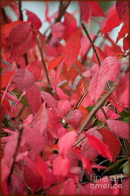 Photograph - Leaves Of Red by Jennifer E Doll