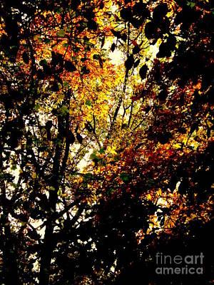 Photograph - Leaves Of The Season by John Potts