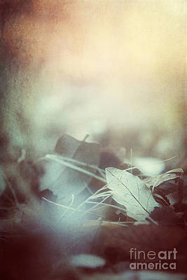 Leaves Of Time  Art Print by Trish Mistric