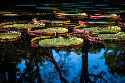 Photograph - Leaves Of Victoria Regia With Trees Reflections. Royal Botanical Garden In Mauritius by Jenny Rainbow